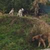 Ugrožen rad sarajevskih vrtića zbog pasa lutalica