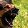 Učestali napadi pasa lutalica na školarce