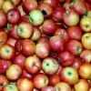 I AKO STE ZNALI, VAŽAN PODSJETNIK: Nevjerojatno šta jedna jabuka dnevno čini organizmu!