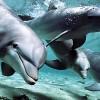Pogledajte zapanjujuću inteligenciju delfina (VIDEO)