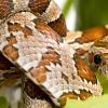 INDONEZIJA: Jela i pića od zmijskog mesa  i krvi za ljepotu i zdravlje