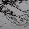 Zrak u Tuzli, Zenici, Kaknju i Sarajevu i dalje nezdrav i opasan za osjetljive grupe stanovništva